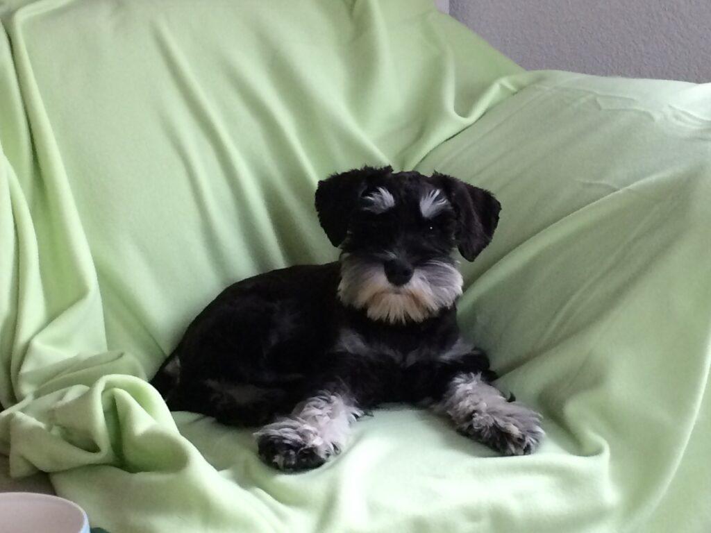 Kalle - unser Studio-Hund